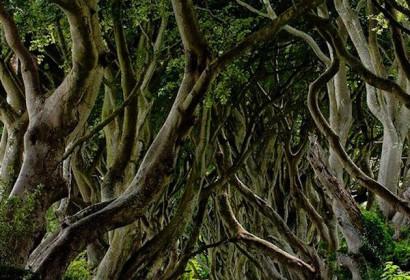 Con đường tuyệt đẹp với hàng cây 2 bên ở Bắc Ai-Len